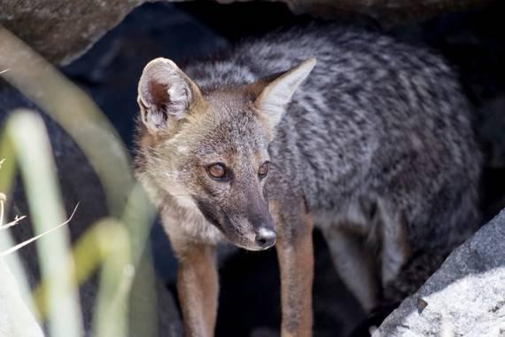 jucordivph en Hamelin: Fauna