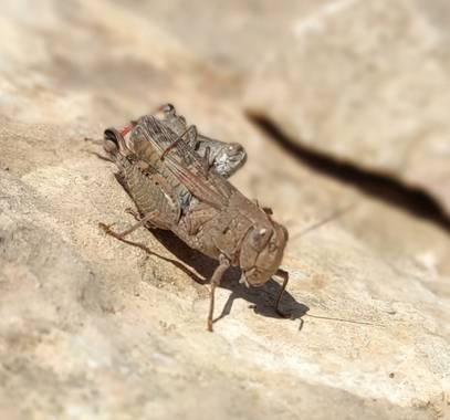 Helenbell33 en Hamelin: Fauna  (Alcalà de Xivert), #senderismodeproximidad #alcocebre #castellon #comunitatvalenciana