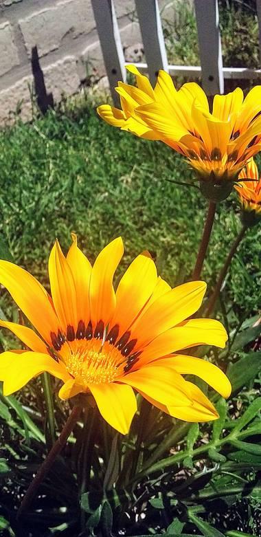 Emanuel Soto Icazatti en Hamelin: Flora  (Villa General San Martín), #Flor #Flower #Jardín #Garden