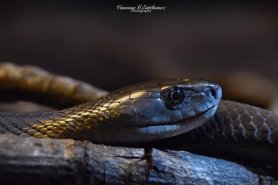 galuuna79 en Hamelin: Fauna  (Madrid), #serpientes  #fauna  #animales  #naturalezaviva