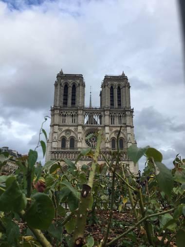 rafaelobregondorantes en Hamelin: Paisaje  (Paris), Notre dame.
