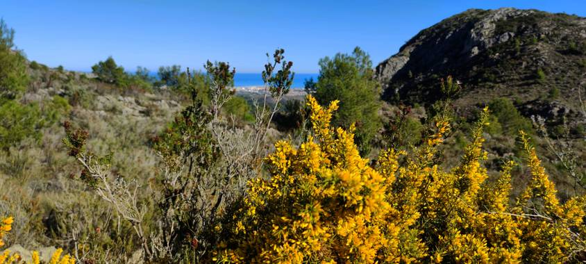 aidalzira en Hamelin: Paisaje  (Gandia), El amarillo siempre queda bonito 🤗 #paisaje #paisajes
