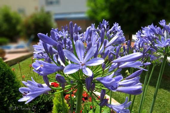 manuel.torres1 en Hamelin: Flora  (El Vendrell), #flora21