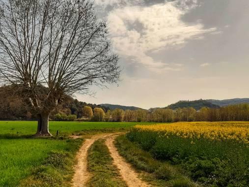 Manelsersol en Hamelin: Paisaje  (Les Preses), Los campos de colza de la Garrotxa.hoy. #paisajesnaturales #Paisajes #Nature #Naturaleza #Flores