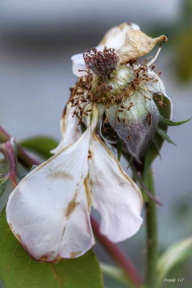 Frankgt48 en Hamelin: Flora  (Pedraza), #flora