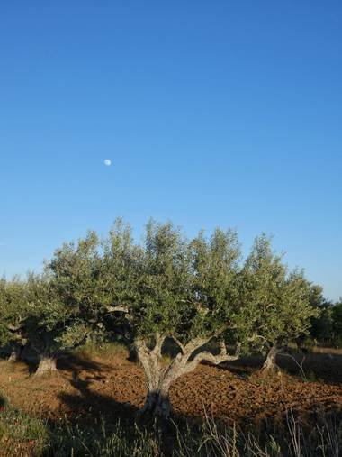 mariale en Hamelin: Paisaje, 📸 #marialemdza Provincia de Zamora, primavera 2021. #Naturaleza #paisaje #paisajes #landscape #BellezaNatural  #Naturaleza #...