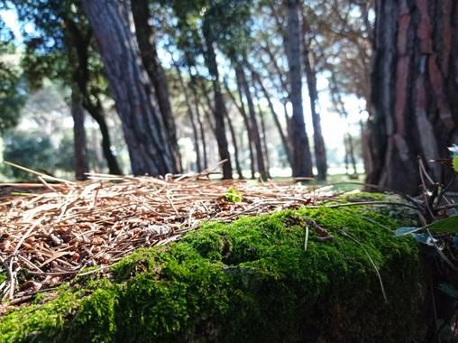 Bellasira en Hamelin: Paisaje  (Cardedeu)