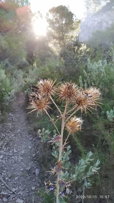 Ajreinapacheco en Hamelin: Flora  (Alcaucín), #sierratejedaalmijaraalhama