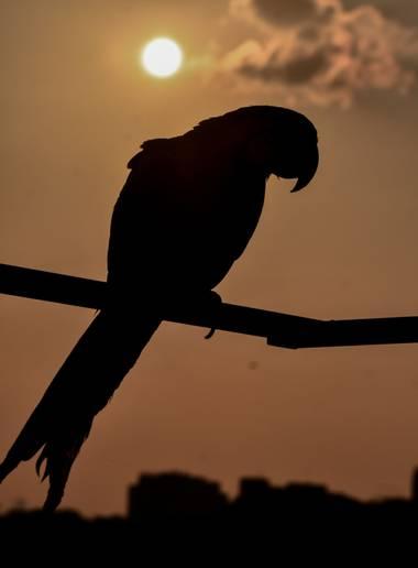 José Viana en Hamelin: Fauna  (Caracas), #ave #avestropicales #guacamayojacinto #guacamaya