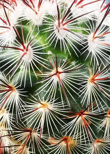 Mararuizasensio en Hamelin: Flora  (Marbella), Captus #ParquesyJardines #captus #macro #huaweiphotography #p30pro