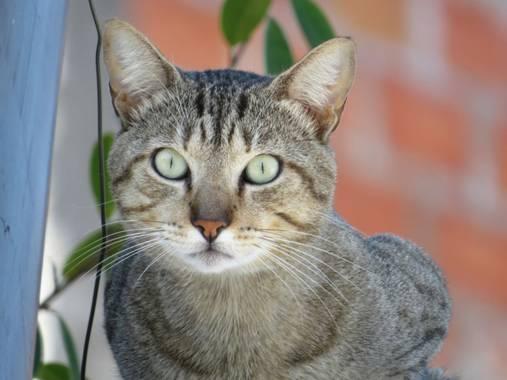 Gloria_momsalve en Hamelin: Fauna, El gato de mi azotea