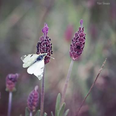 Yatoma66 en Hamelin: Fauna  (Cenicientos), La vida es rosa