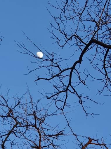 Safari.faby en Hamelin: Paisaje, #moon #luna #ramas