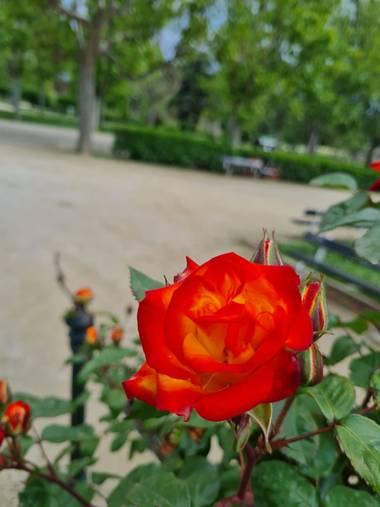 Liliannetnavas en Hamelin: Paisaje  (Zaragoza), #flora21 #naturaleza #rosasrojas