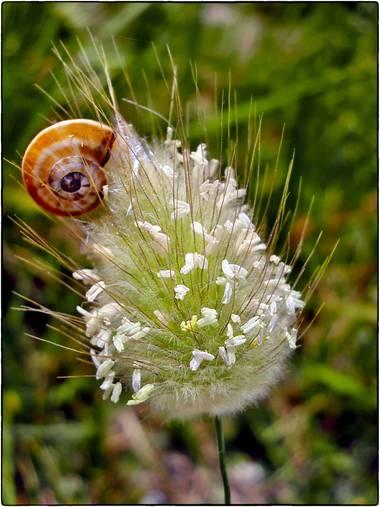 Breogán654 en Hamelin: Fauna  (Benissa), #caracol