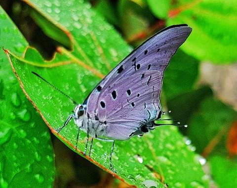 Neilmarquez en Hamelin: Fauna  (Ciudad Jardín), De paseo por el parque he visto esta hermosa mariposa terminando su procesos de crecimiento..Barranquilla C...