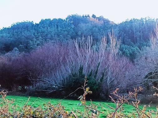 raquelarriola15 en Hamelin: Paisaje  (A Coruña), Paisaje y sus colores. #parquesyjardines