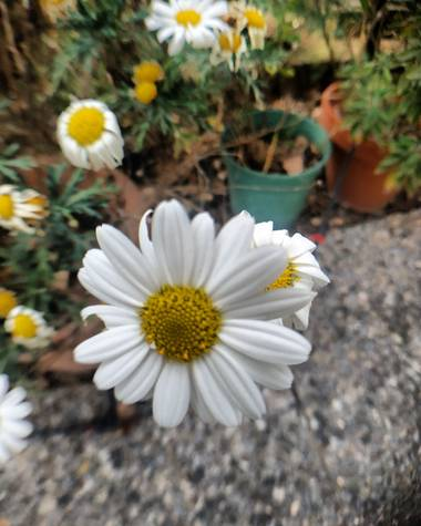 soniagallego71 en Hamelin: Flora, #naturephotography #nature #naturaleza#natura#flowers #flores #flors#fleurs #primavera #primavera2021 #printemps
