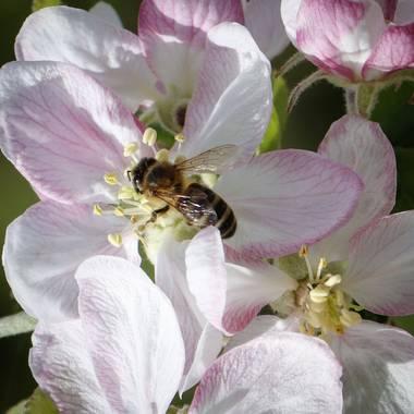 susana.fandos en Hamelin: Fauna, #primavera