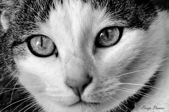 Borja.Ra en Hamelin: Fauna  (Toledo), TRUE LOVE #gato #gatunos #catstagram #cats #pets #blackandwhitephotography #photography #españa #cat #gatos #felinos