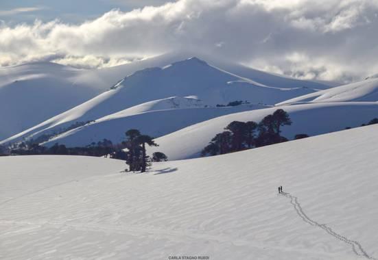Carla Stagno en Hamelin: Paisaje  (Curacautín), Caminando hacia el volcán Lonquimay - Chile #paisajes #paisajesdechile #invierno20 #volcanesdechile #volcan...