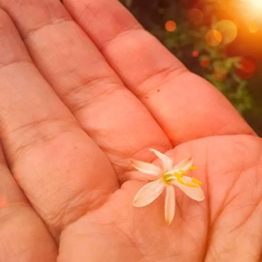 Gabriela Analía Russo en Hamelin: Flora  (Mechongué), Un regalo muy especial