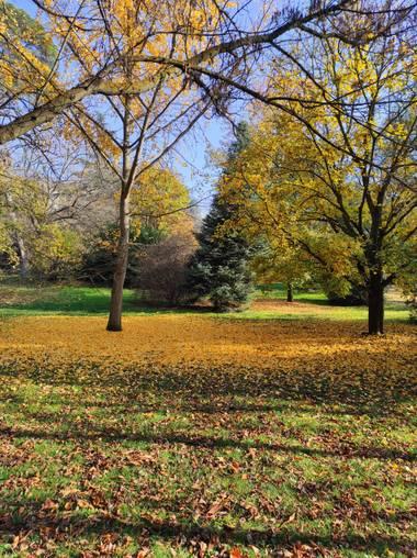Natalyospina9921 en Hamelin: Paisaje  (Madrid), El otoño siempre trae una hermosa paleta de colores mágicos #parquesyjardines