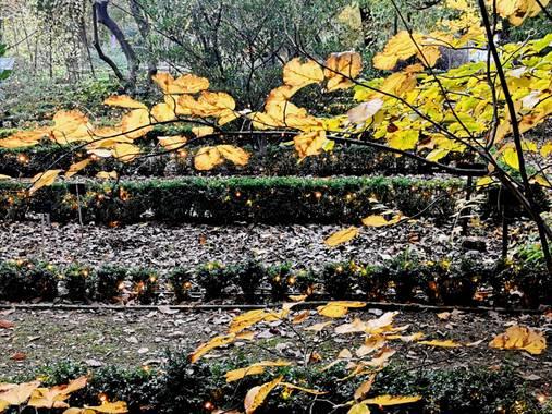 Trasgusmc7 en Hamelin: Paisaje, #parquesyjardines  @trasgusmc7 Mari Carmen Botánico de Madrid