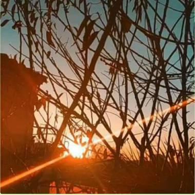 Isabeluchii 🤪 en Hamelin: Paisaje, Día soleado entre palmeras