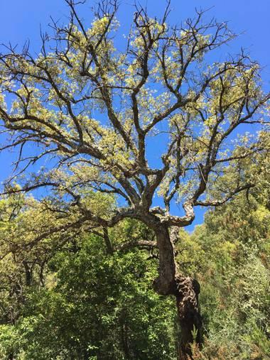 auricahk en Hamelin: Flora, Costa Del Sol