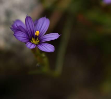 Josefina en Hamelin: Flora  (Punilla), #fotografia #flora #flor