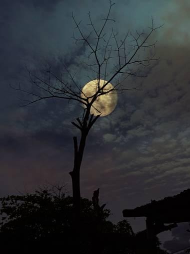 Marçe.Lateacher_López en Hamelin: Paisaje  (Arauca), #hamelinpaisajes  #paisajescolombianos  #landscapenight  #moon