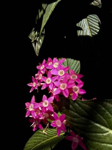 BrenMG en Hamelin: Flora  (San Nicolás Galeana), #flora21