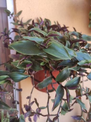 Nicolasromerohbg en Hamelin: Flora