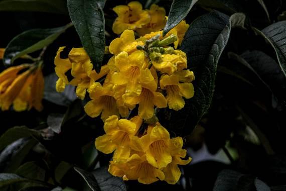 Franciss RNR  en Hamelin: Flora  (Pimampiro), #flora