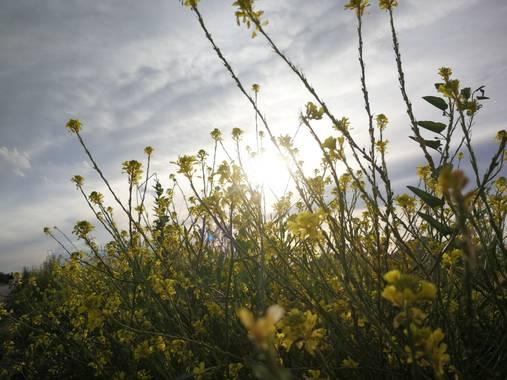 Enlacelion en Hamelin: Paisaje  (Murcia), #Flora #Paisaje #naturaleza