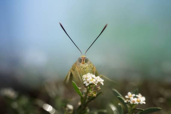 Felicia.sabater en Hamelin: Fauna  (Badalona), #mariposasenespaña