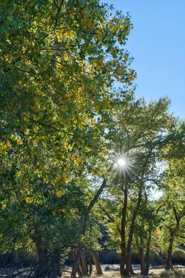 Capturolavida en Hamelin: Flora  (Baza), Parque Natural Sierra de Baza  #paisaje #naturaleza #flora #otoño20