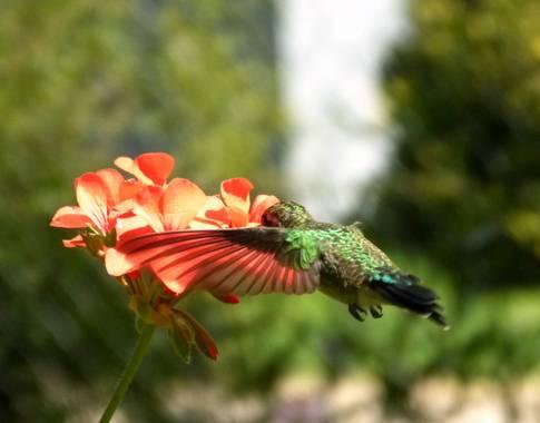 Esthersack en Hamelin: Paisaje  (Sierra de los Padres), #flora21