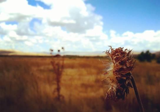 tattuz586 en Hamelin: Flora  (Junín de los Andes), #otoño #mallin #salvaje #libre #pequeñosdetalles #naturaleza #patagoniaargentina