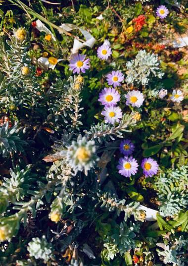 Clari Montal en Hamelin: Paisaje  (Santa Margalida), #primavera en #mallorca