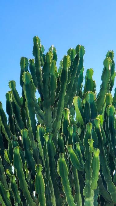 dianaruizmorales.82 en Hamelin: Paisaje  (Murcia), Cactus gigantes !