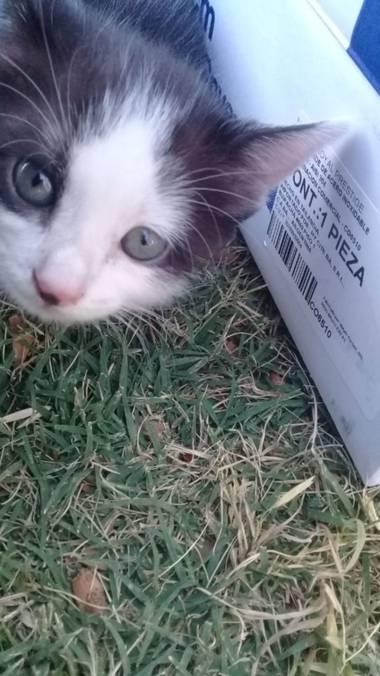 gd23653bad en Hamelin: Paisaje  (San Juan), Esta era hija de mi gatita T^T Tube que darla en adopción, no podía mantener muchos michis