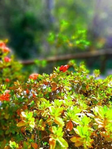 Sovinna en Hamelin: Flora  (Colmenar Viejo)