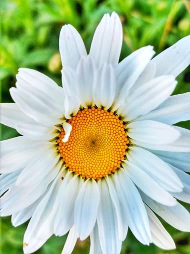 andresmartinez en Hamelin: Flora