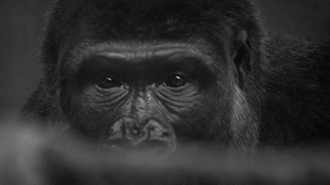 Alberto Lázaro en Hamelin: Fauna, Mirada cautiva