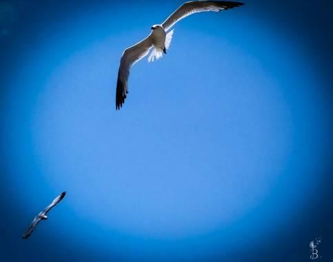 Conbyconv en Hamelin: Fauna  (Andratx), #aves21