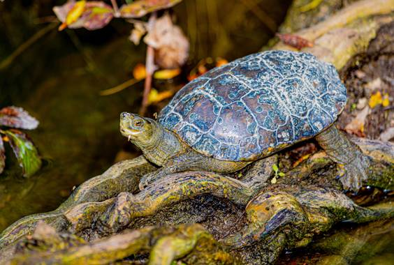 Robertosallen en Hamelin: Fauna