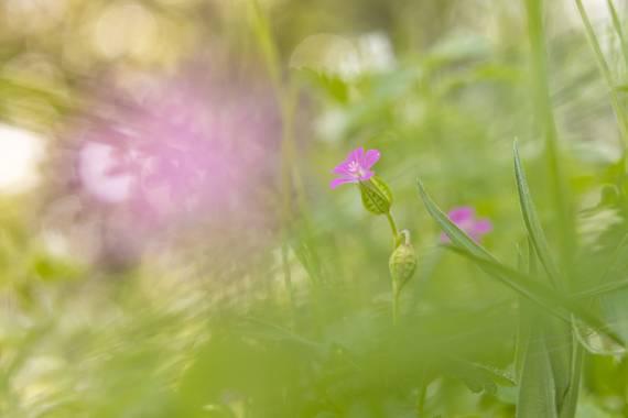 susurrando.caballos en Hamelin: Flora  (Rascafría), #macro #flowers   📷 Canon EOS 90D 🔵 EF-S 18-55mm/F3.5-5.6 con tubo de extensión de 13 mm 💡 Luz natur...