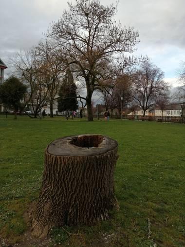 Susandresro en Hamelin: Flora  (Lugo), Tronco arbol